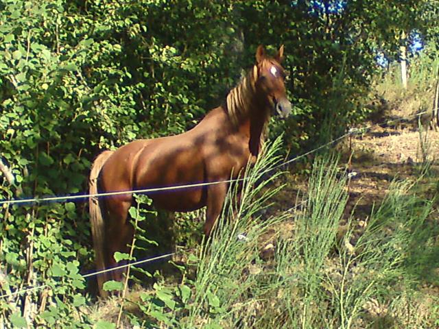 chevaux7